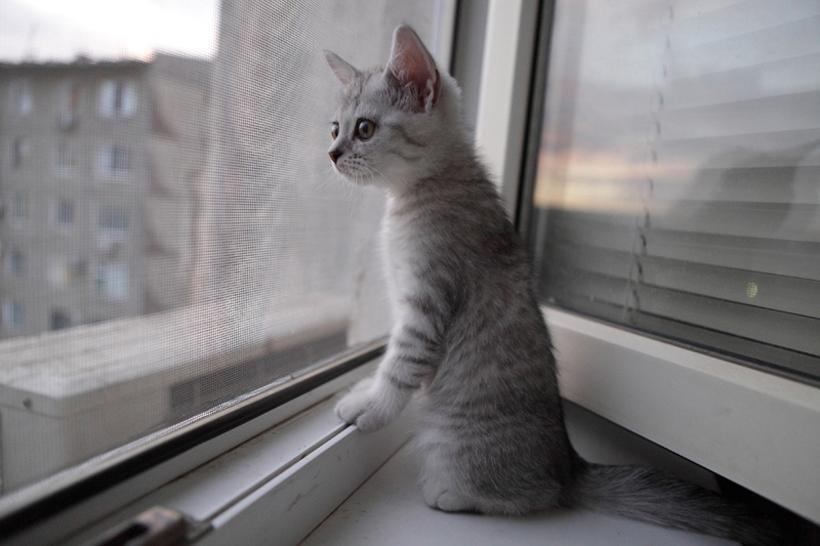 Купить роллеты на окна